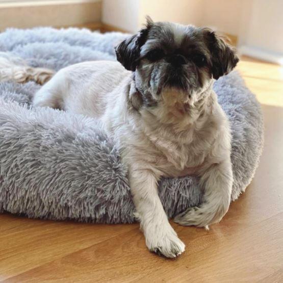 Goedkope Donut Dogbed voor Honden en Katten van AliExpress